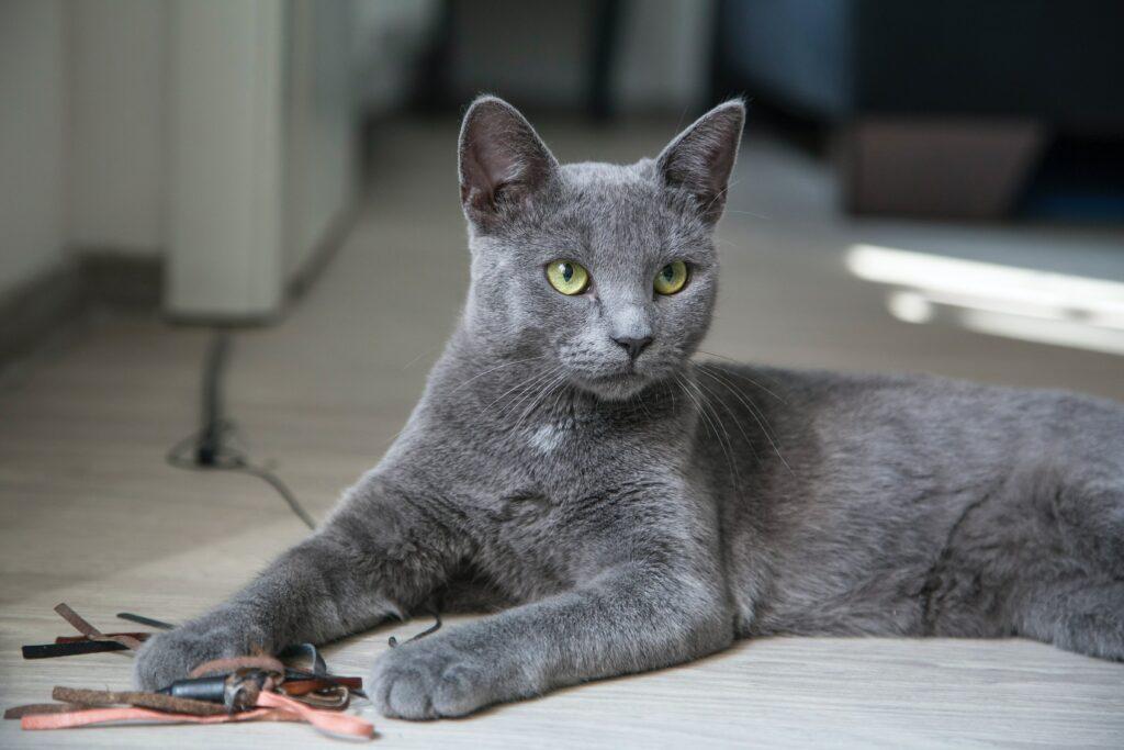 cat scratching carpet