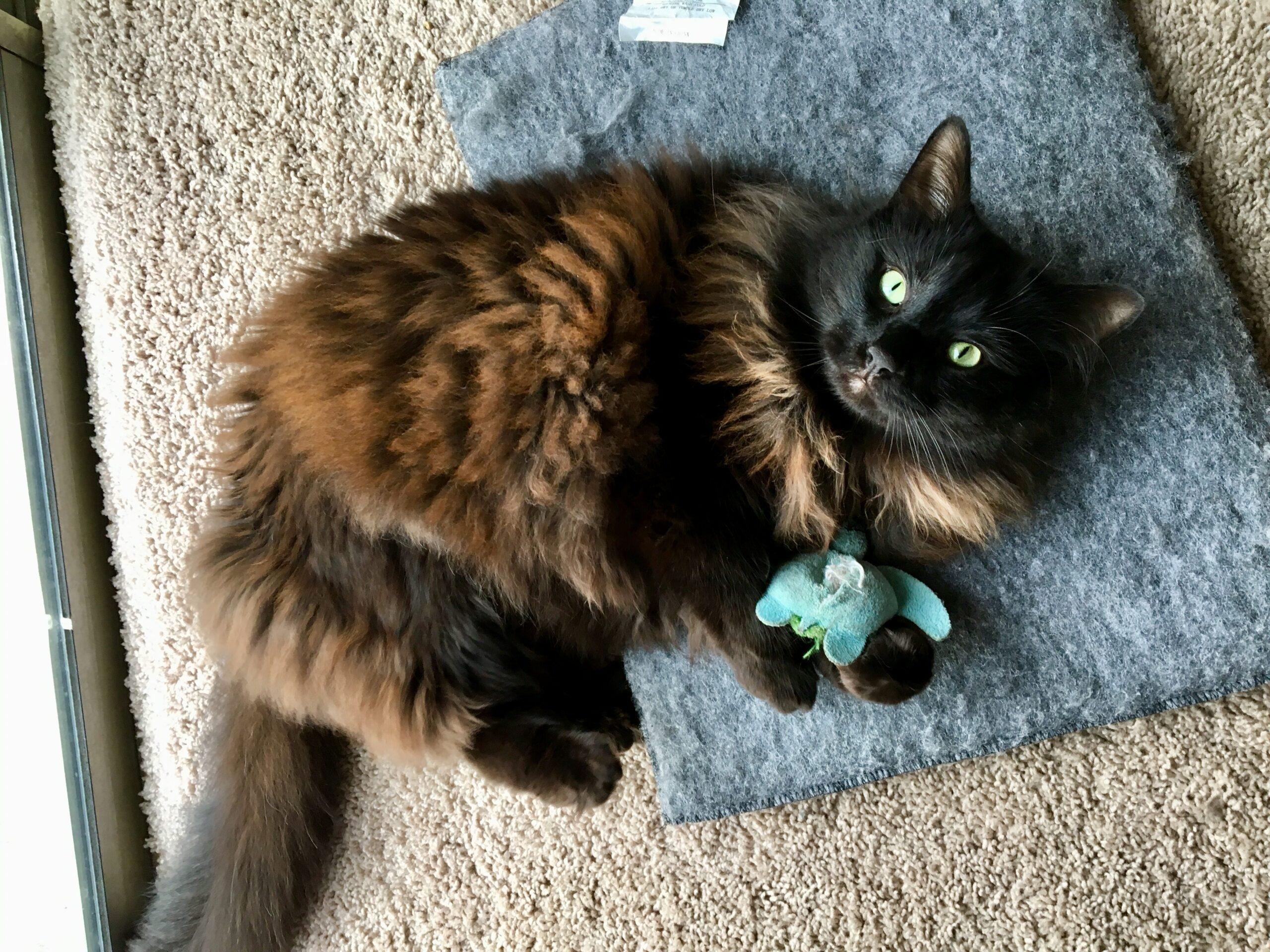 cat toys scaled