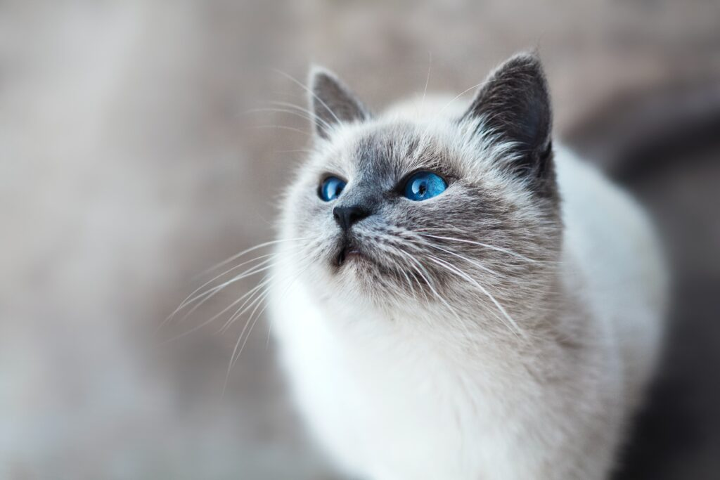 causes of heavy breathing in cats