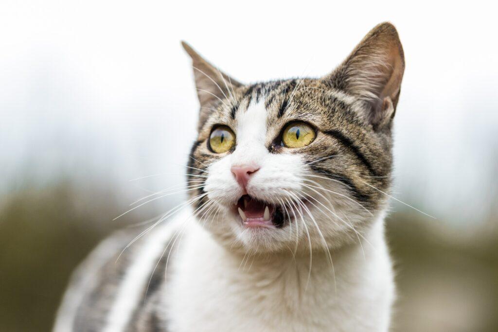 heaving breathing in cats