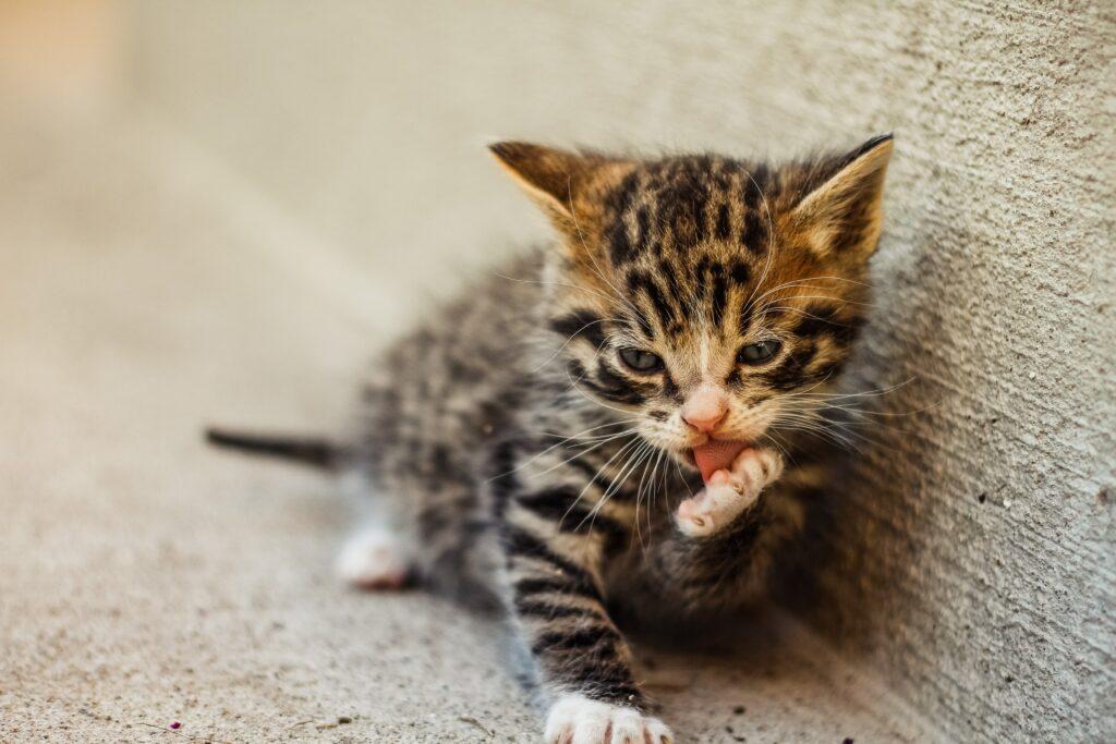 stop cat scratching carpet
