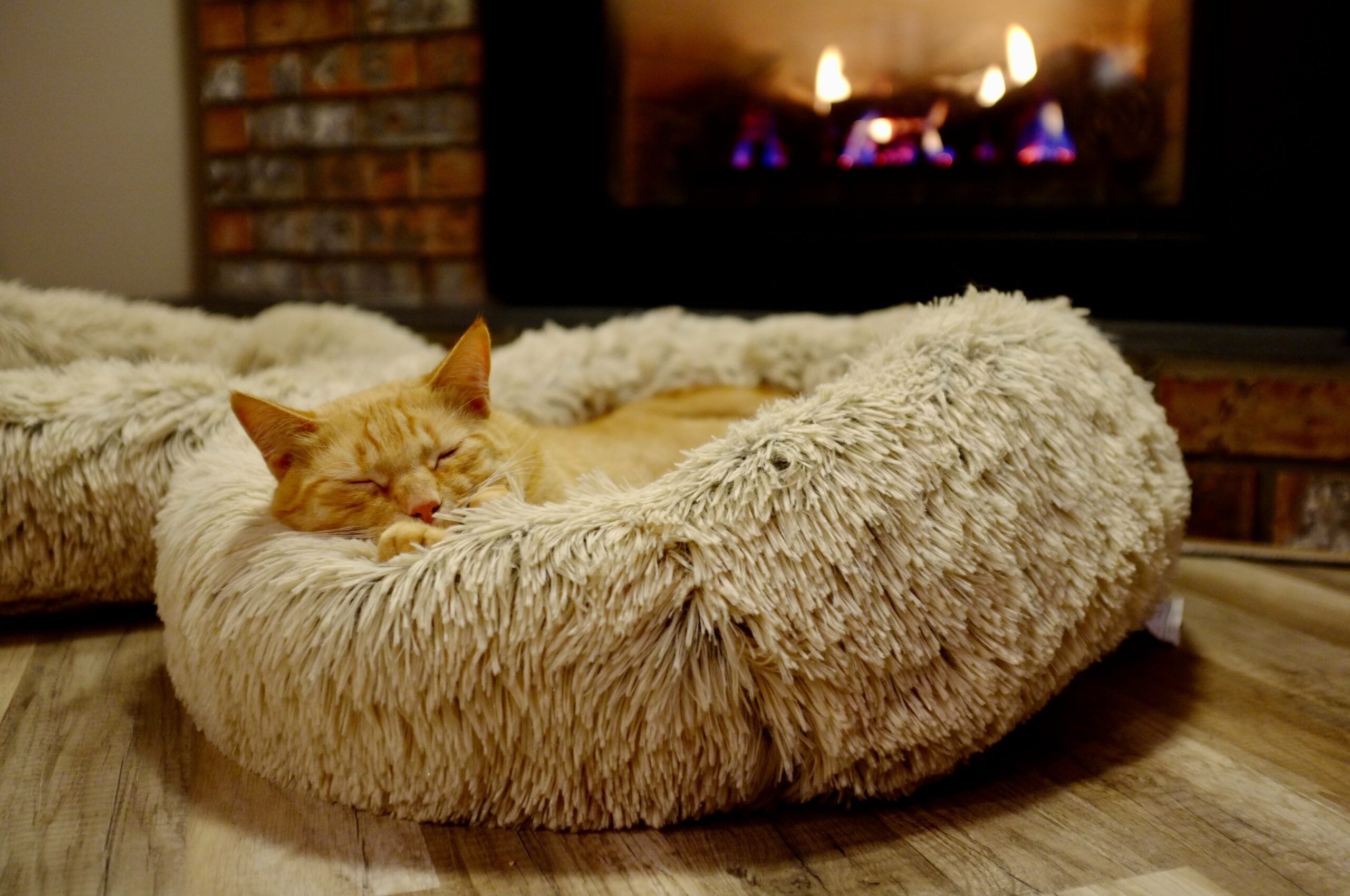 best cat bed scaled