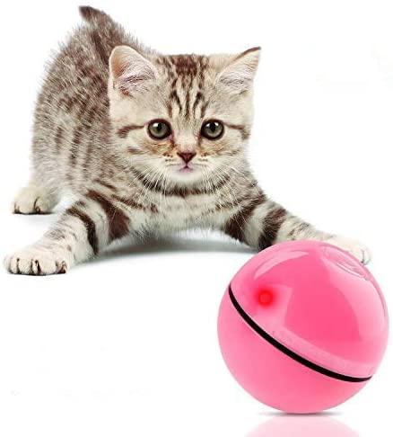 kitten toy 1