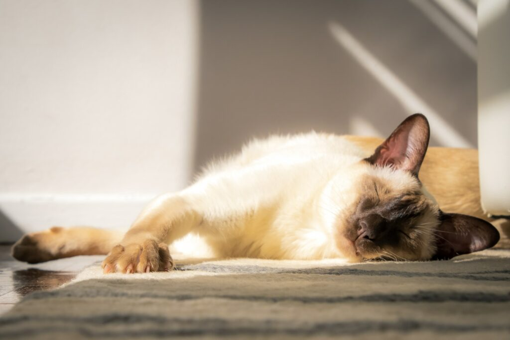 sleeping siamese cats